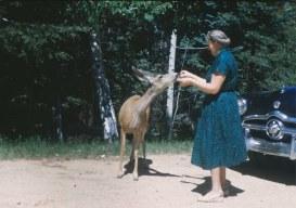 1950s Old Lady Feeds Deer Roadside Scene Vintage Ford Car Original Slide Photo | eBay