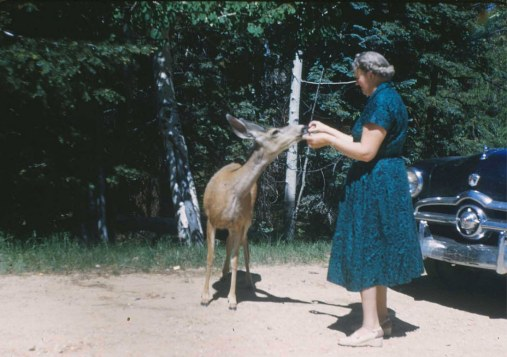 1950s Old Lady Feeds Deer Roadside Scene Vintage Ford Car Original Slide Photo | eBay